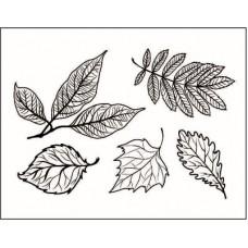 """Набор штампов """" Любимые листья""""-2"""