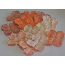 Гортензия  оранжевый  микс.  2,5см(15 штук)