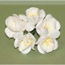 Цветы вишни  белые(5 шт)